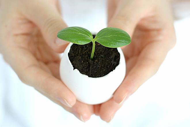 イメージ_植物を包む手